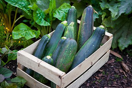 Fresh Tips For Weight Loss Straight From The Garden